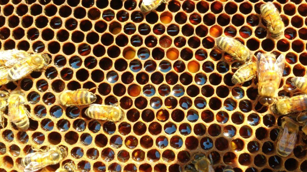 api su telaino con miele e polline
