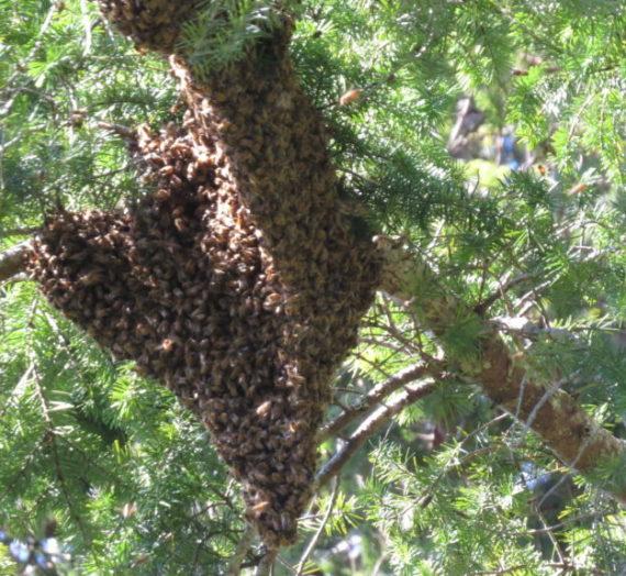 Le api nella foresta di Arnot