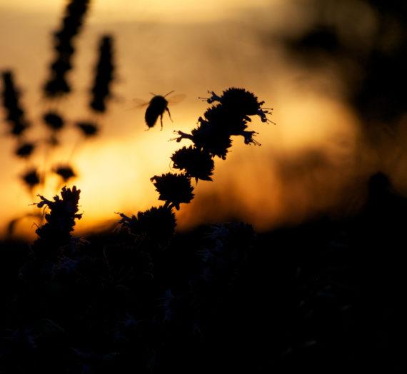 Scomparsa delle api: Le cause.