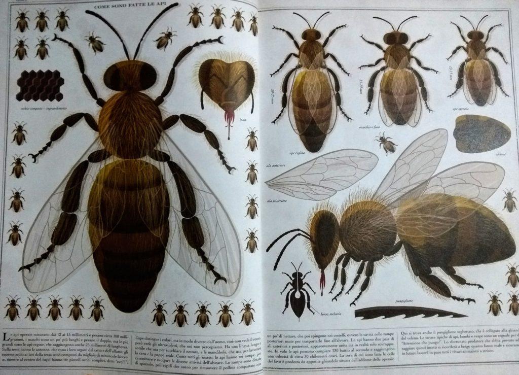 Il regno delle api di Piotr Socha pagina 2