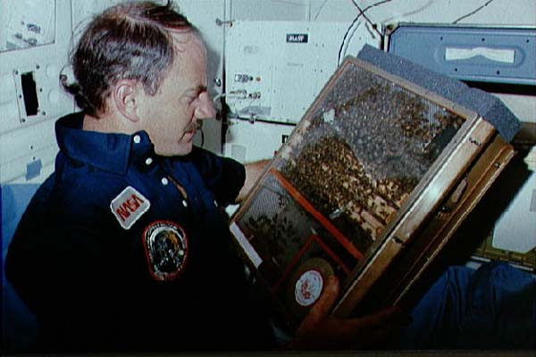 Astronauta che osserva arnia spazio BEM