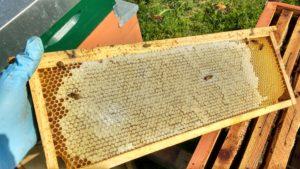 Telaino da miele con cera d'opercolo