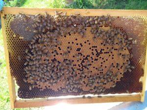 Favo da nido colori della cera d'api