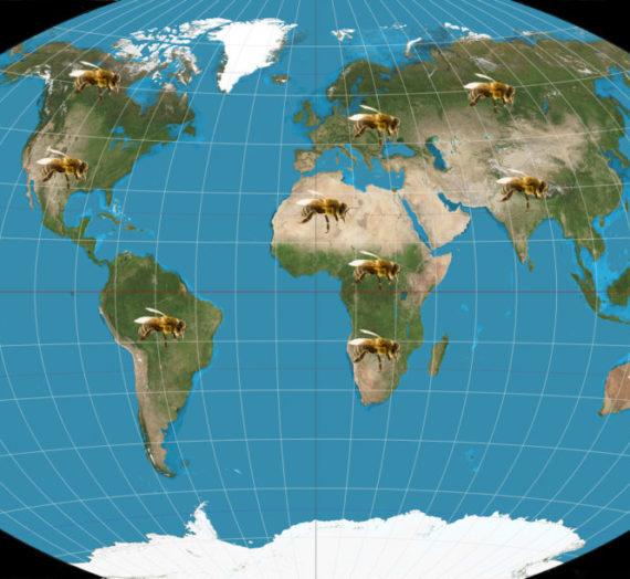 Sottospecie di ape mellifera in Europa