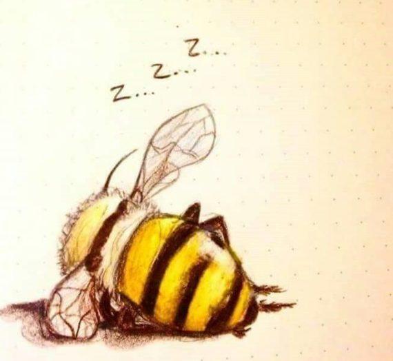 Le api dormono?