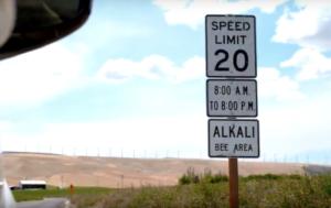 <em>Cartelli con limiti di velocità imposti al traffico durante le ore di raccolta delle api Alkali (dalle 8 del mattino alle 20).</em>