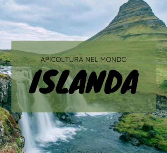 Apicoltura nel mondo: il caso islandese