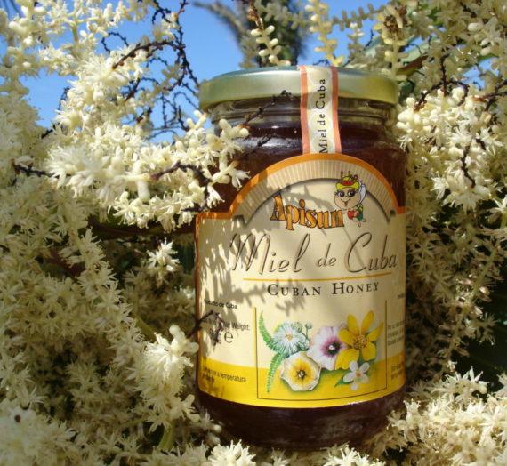 Apicoltura dal mondo: il miele di Cuba