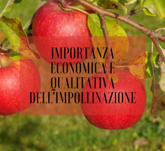L'importanza economica e qualitativa dell'impollinazione