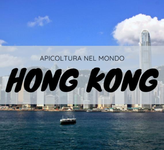 Yip Ki-hok, l'apicoltore di Hong Kong