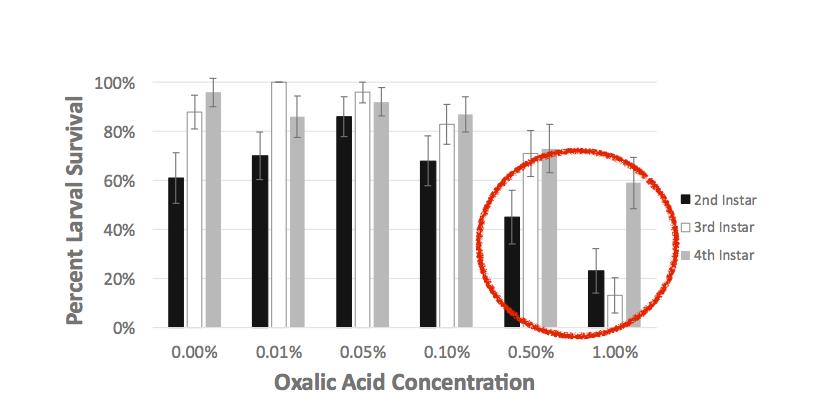 sopravvivenza larve acido ossalico 24 ore