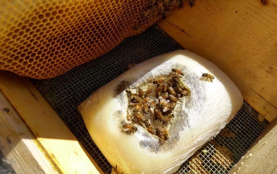 api su panetto di candito